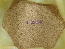 【野菜部屋~】黃金小麥草種子 ,1斤(600公克) ,營養價值高 , 含豐富維生素 , 寵物可食用 , 貓草種子~