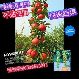 【嫁接款】時尚蘋果樹【快速結果】柱狀蘋果最新品種 非星蘋果牛奶果青蘋果蜜蘋果潤泰四號【嘉義熱帶果樹】