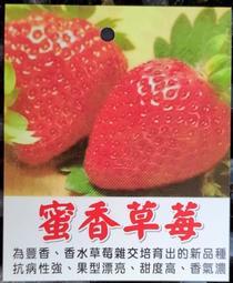 (買十送一)大湖豐香、蜜香、特大果、桃薰、蘋果、美姬草莓【新中港花卉】草莓苗 水蜜桃