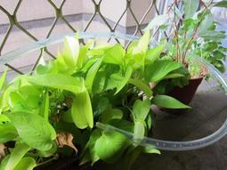 [ 微浮力 ] 園藝盆栽 定時澆水器 定時澆花器 自動澆水 自動澆花 長管式