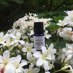 Comely 玫瑰天竺葵有機認證純精油10ml 卡莫莉英國原廠進口有機精油 Rose Geranium Pure